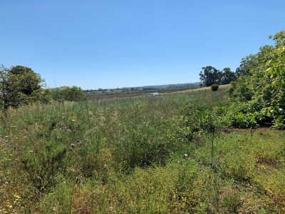 Land for sale in Portimão